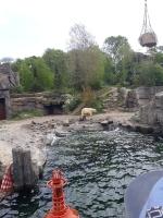10. Geburtstag/Besuch Zoo Hannover 27.04.2019